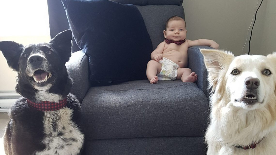 Deux chiens et un bébé